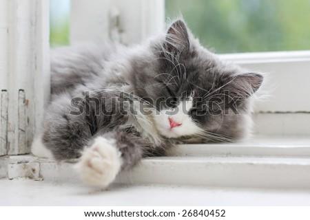 picture of sleeping kitten on window ledge - stock photo