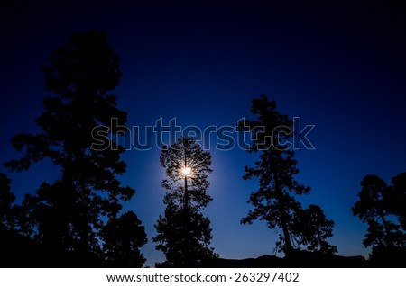 Picture of The Backlight Tree Silhouette over a Blue Sky - stock photo