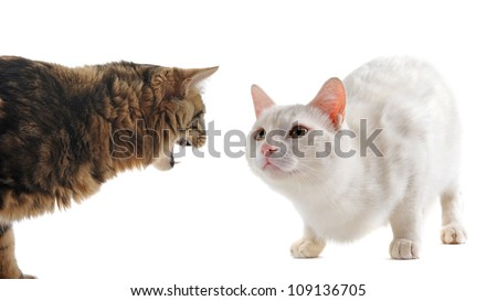 picture of two cats in a conflict in front of a white background