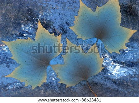 picture painted by me named Onset of winter, it shows 3 gradient blue toned dry leaves in abstract blue back