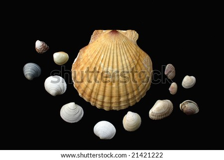 picture with shells on a black background - stock photo