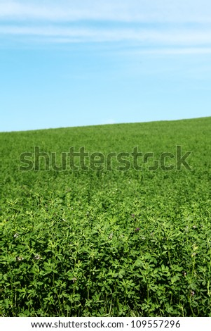 picturesque green field and blue sky whit shadow