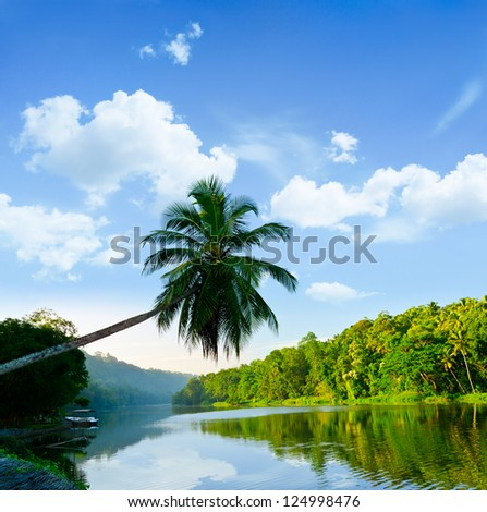 picturesque palm tree leans over the tropical river in the early hours