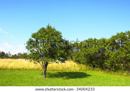 Picturesque summer landscape  and bright trees and bushes