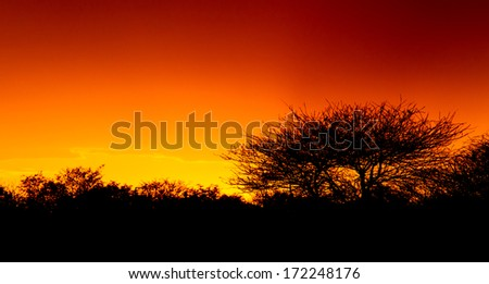 Picturesque tree and bushes silhouette over sunset, Namib desert, Namibia - stock photo