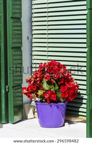 Picturesque  window with green  shutters and pot geranium  flowers on orange wall of houses on the famous island Burano, Venice, Italy - stock photo
