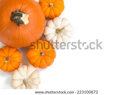 Pie pumpkin surrounded by mini pumpkins against white background, top view, copy space - stock photo