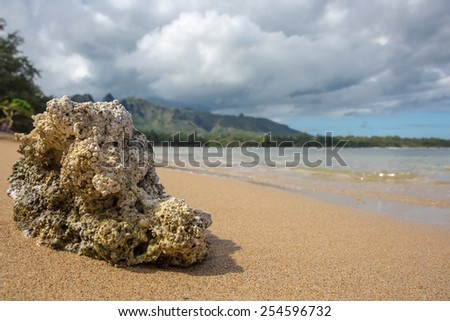 Piece of coral washed up of a golden sandy beach of Kauai - stock photo