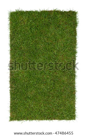 piece of grass isolated on a white background - stock photo