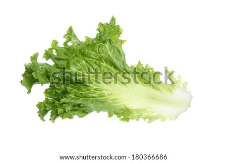 Piece of lettuce on white  - stock photo