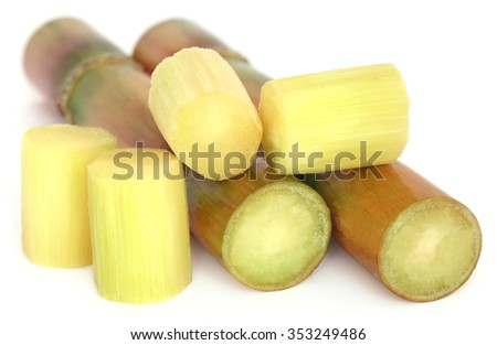 Piece of sugarcane over white background