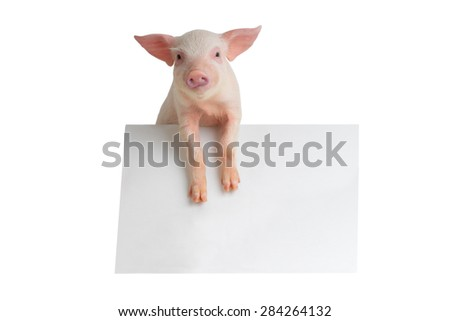 pig with sheet for a text writing  - stock photo