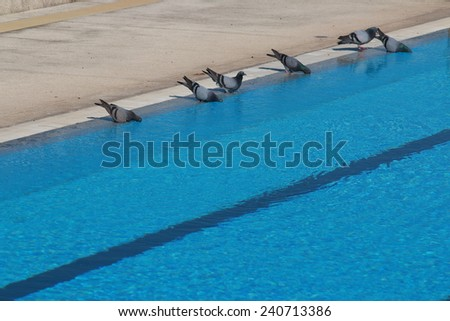 Bird swim stock photos royalty free images vectors How to make swimming pool water drinkable
