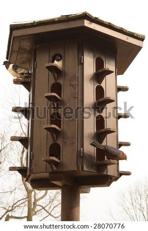 Pigeon loft with three various pigeons - stock photo