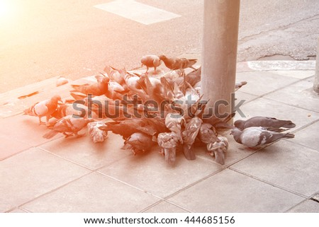 pigeons eating bread in the city street