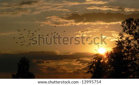 pigeons flying to the sunset - stock photo