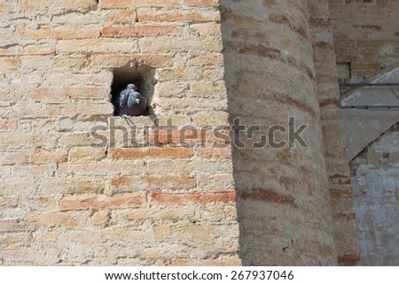 Pigeons in a wall nest