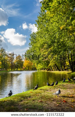 Pigeons on the river in autumn park - stock photo