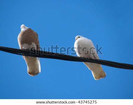 Pigeons rest on a wire against blue sky - stock photo