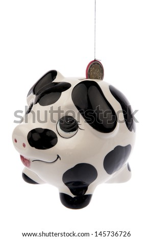Piggy bank with black and white cow spots, looking upwards to a Euro coin in its slot and isolated in white background from the left side - stock photo