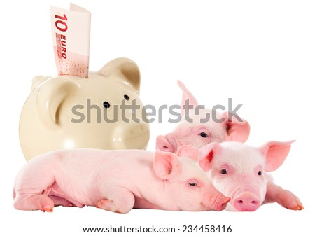 Piglets and piggy bank with money in 10 euros. In isolation. Investment in pig - stock photo