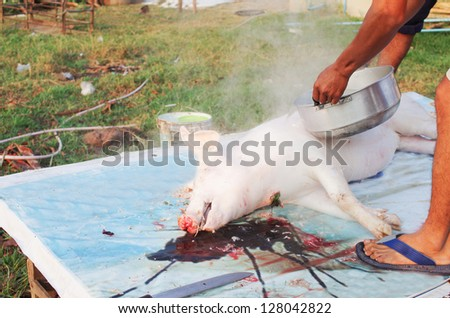 Pigs to be killed for food in the morning, a small farm. - stock photo