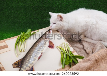 pike with a cat - stock photo