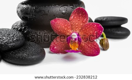 pile black zen stones and red orchid, phalaenopsis on white background, spa concept - stock photo