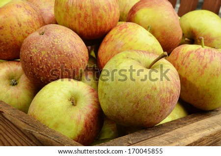 Pile of apples for sale at marke