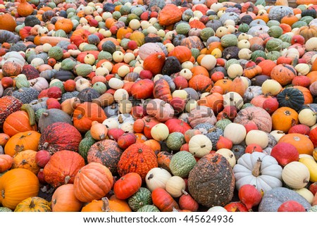 Pile of big colorful pumpkins, autumn harvest natural background