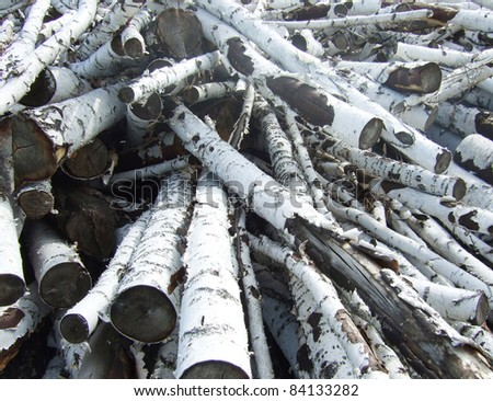 pile of birch logs - stock photo