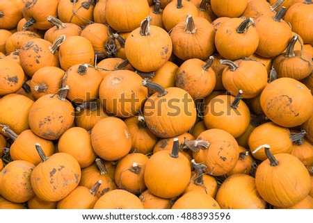 Pile of carving pumpkin on straw for sale at local barn. Bright orange round Halloween pumpkins to carve into Jack-O-Lanterns. Background for fall, autumn, Halloween and Thanksgiving seasonal display.