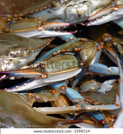 Pile of crabs fresh caught on the boat - stock photo