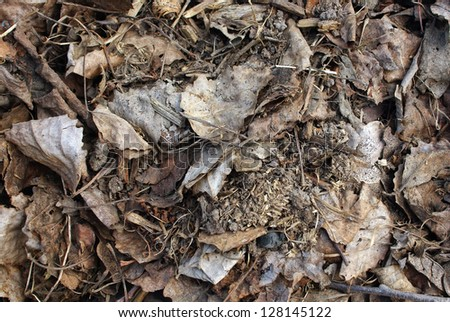 Pile of dry leaves just after snow melt away in early spring. - stock photo