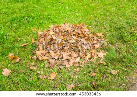 Pile of dry leaves on green grass