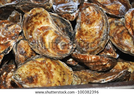 Pile of fresh caught closed oyster shells - stock photo