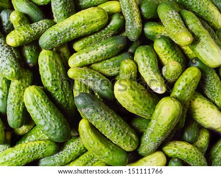 Pile of fresh green cucumbers shot from above