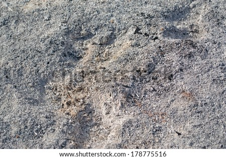 pile of grey ashes - stock photo