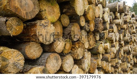 Pile of logs cut down in a forest - stock photo