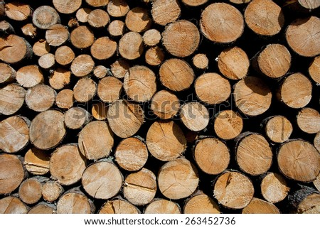 Pile of logs in High Tatra mountain, Poland