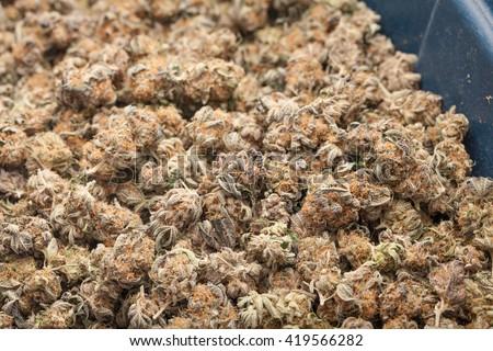 Pile of Marijuana Buds - stock photo