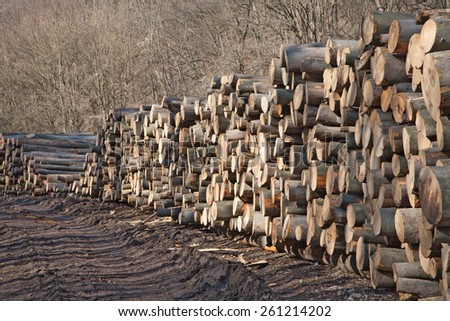 Pile of mixed wood logs - stock photo