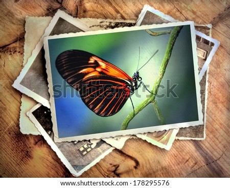 pile of old vintage photographs with on top a colorful image of a gorgeous butterfly - stock photo