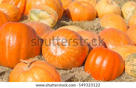 Pile of Pumpkins with Straw in Garden , Selective Focus