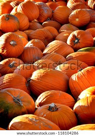 Pile of ripe orange pumpkins with stems - stock photo