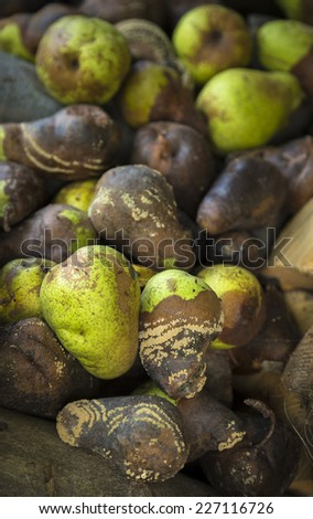 pile of rotten green pears - stock photo