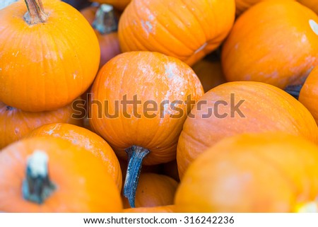 Pile of small pie pumpkins at the Farmer's amrket. - stock photo