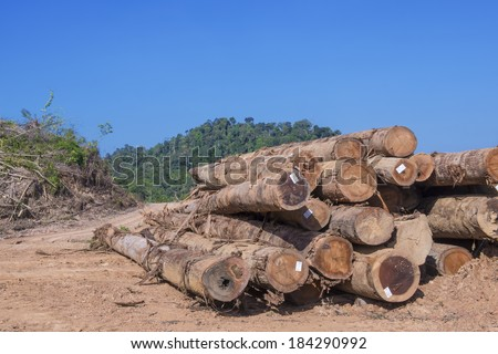 Pile of Timber Logs in Malaysia rainforest - stock photo
