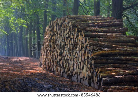 Pile of wood in a beech forest; first autumn leaves on the ground. - stock photo