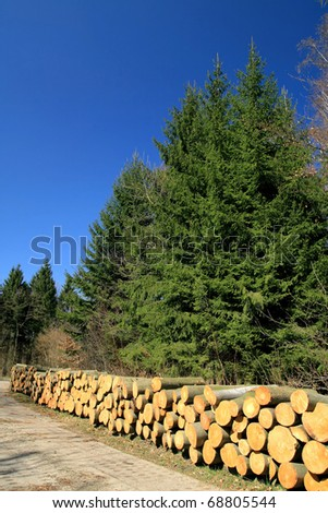 Pile of wood in forest - stock photo